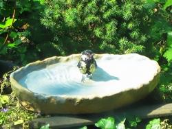 Ein tierisches Badevergnügen...:)