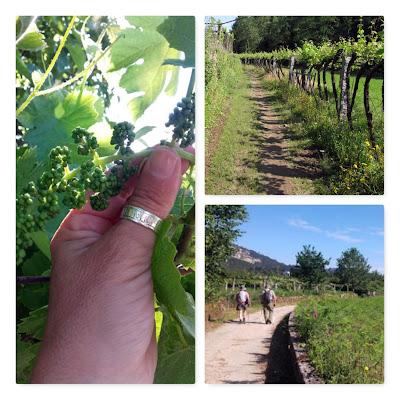 mão segurando um cacho de uva a surgir, peregrinos de Santiago