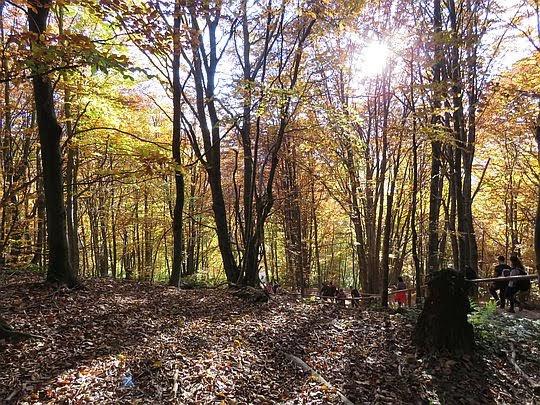 Słońce wnika do lasu przez barwną koronę.