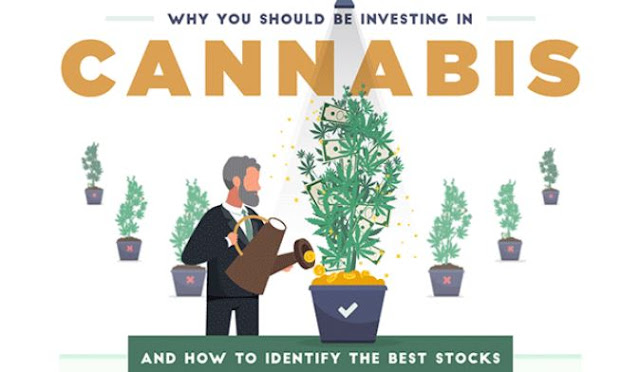buy cannabis stocks invest marijuana stock