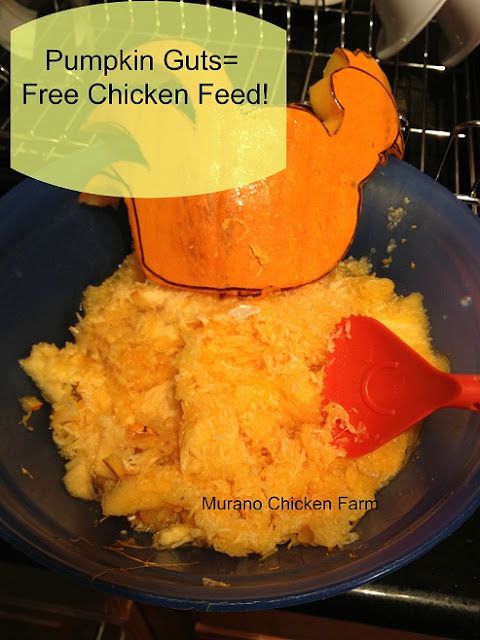 free chicken feed - leftover pumpkin