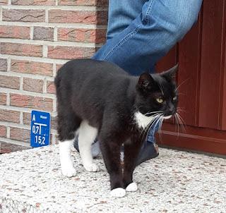 Katze ist nun im Tierheim