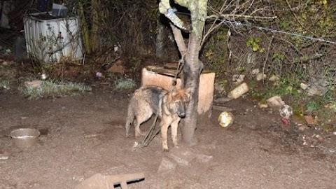 Állatkínzás Veszprémben: kegyetlenül elbánt a kutyájával egy 33 éves férfi