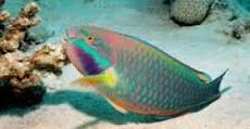 Jenis Ikan Karang Bermanfaat Media Penyuluhan Perikanan Pati