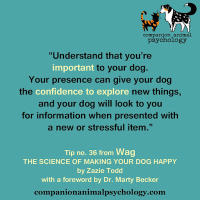 You're important to your dog: A tip from Wag
