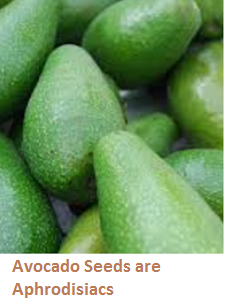 Avocado Seeds are Aphrodisiacs