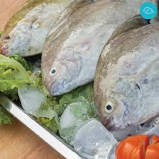 Kumpulan Racikan Umpan Ikan Bawal Paling Jitu Ampuh Dan Mudah Dibuat