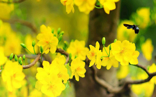 Top 7 kinds of flower for Tet holiday in Hoi An 1