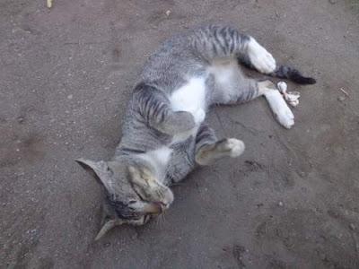 Ciri-ciri Fisik Kucing Secara Umum Khusus Lengkap
