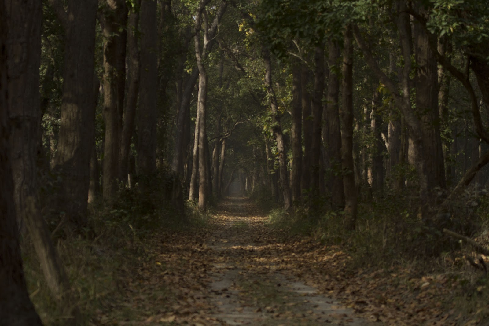 Dudhwa+Landscape+1.JPG