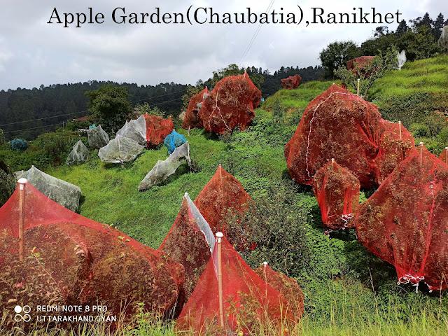 एप्पल गार्डन रानीखेत