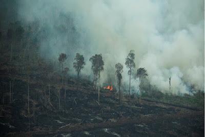 Pembakaran Hutan dan atau  lahan adalah Tindak Pidana Lingkungan Hidup