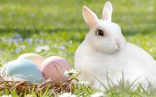 Coniglio di Pasqua vero