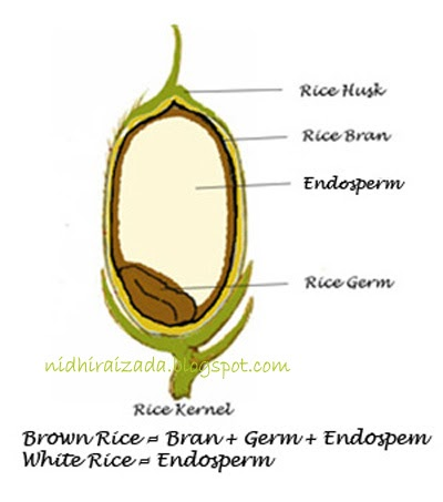 it's indian everyday: which is better for the body, brown rice or white rice diagram parts of rice #8