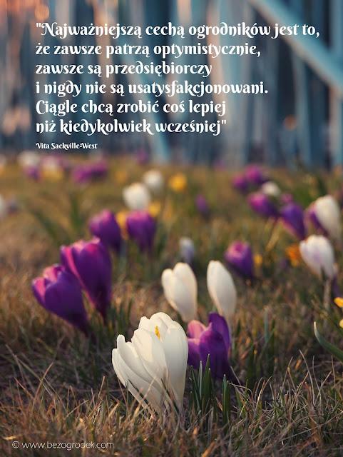 powiedzenia o kwiatach
