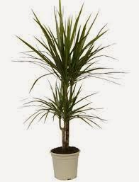 Flores De Interior Resistentes Plantas De Interior Resistentes With - Plantas-de-interior-resistentes