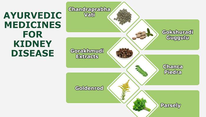 Ayurvedic Medicine for Kidney Disease | Ayurvedic Kidney Care