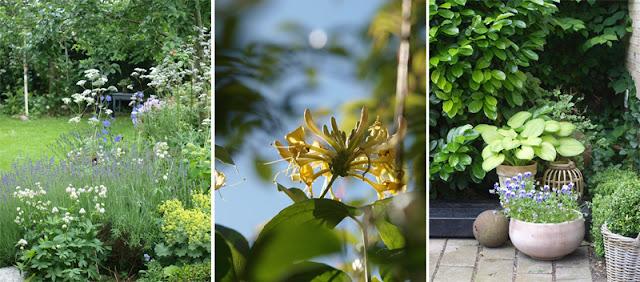 Åben have med mange frodige haverum