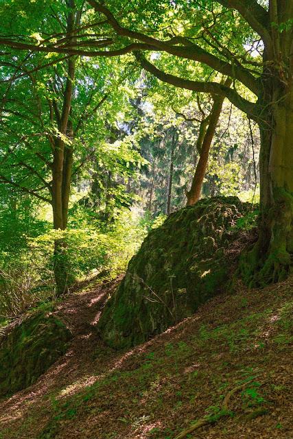 Westerwaldsteig Etappe 6 von Freilingen nach Nistertal  Westerwälder Seenplatte – Stöffelpark 16