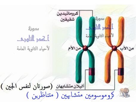 جهود العلماء لمعرفة المادة الوراثية للكائن الحى – الحمض النووى ديؤكسى ريبوز – DNA – صبغيات