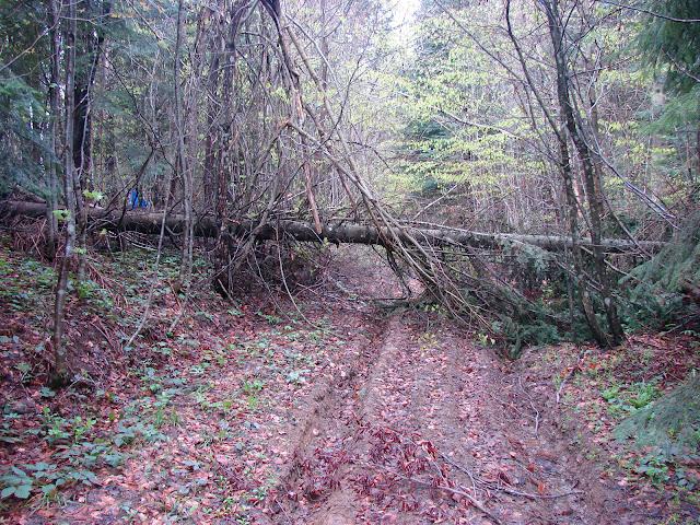 Дерево поперёк дороги