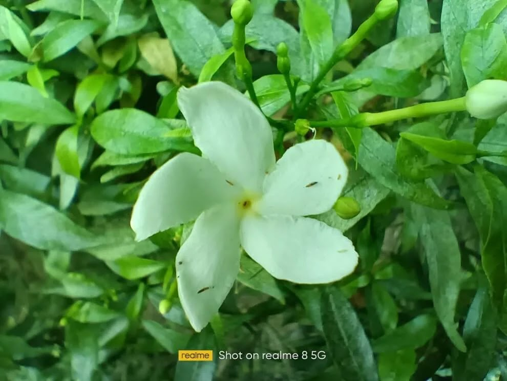 realme 8 5G Camera Sample - Flower, Macro