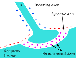 Synapse and Classification of Synapse