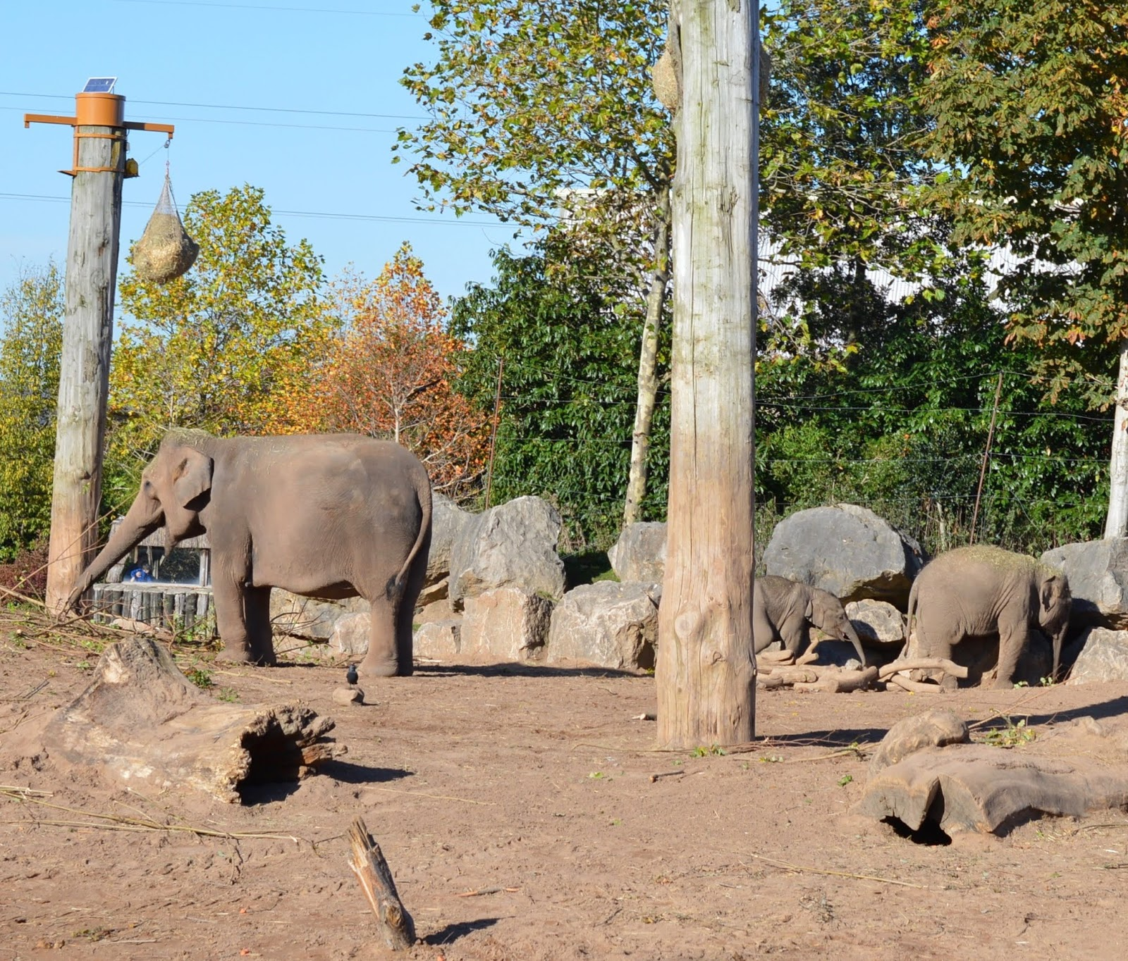 Tips for Visiting Chester Zoo from Newcastle - Elephants