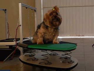 propriocepção para cães