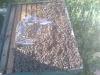 Προσθήκη πατωμάτων τον Φεβρουάριο: Έχω μελισσια σχεδόν 10αρια, να βάλω απο τώρα 2ο όροφο