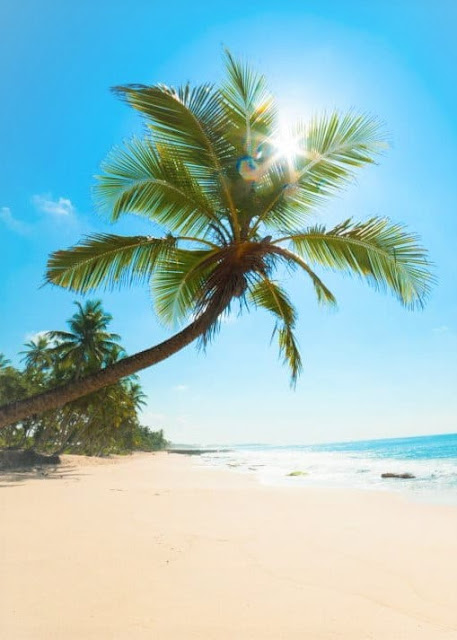 Coming Soon to Tammy Talk- The Everyday Vacay Cyber Seminar Series