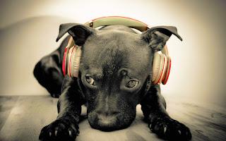 Ascultă Cu Sufletul