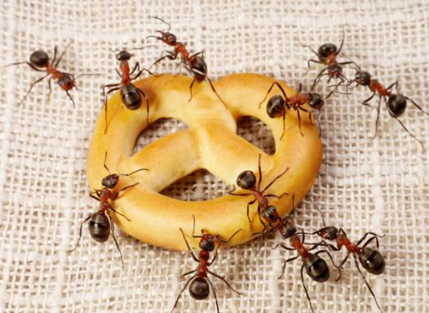 Dedetização formigas Jardim São Luís Sp