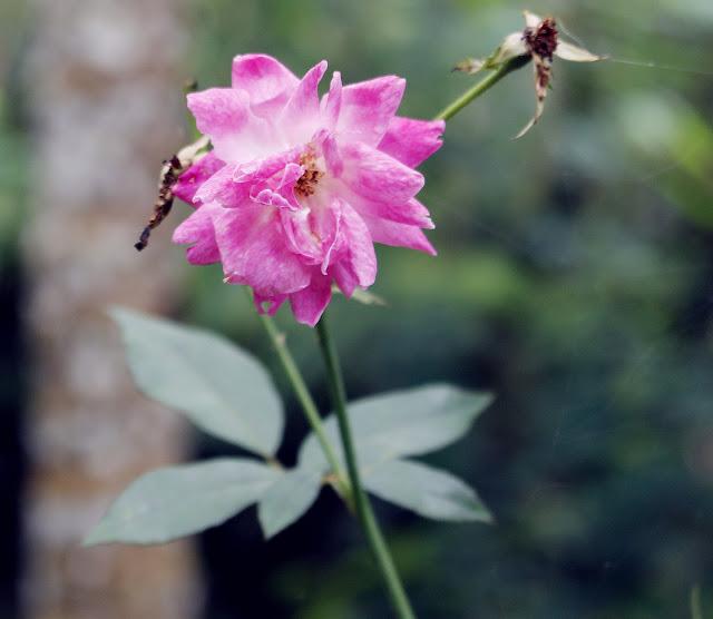 Foto Macro Bunga Yang Indah Dari Pedesaan
