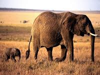 Elephants Puzzle