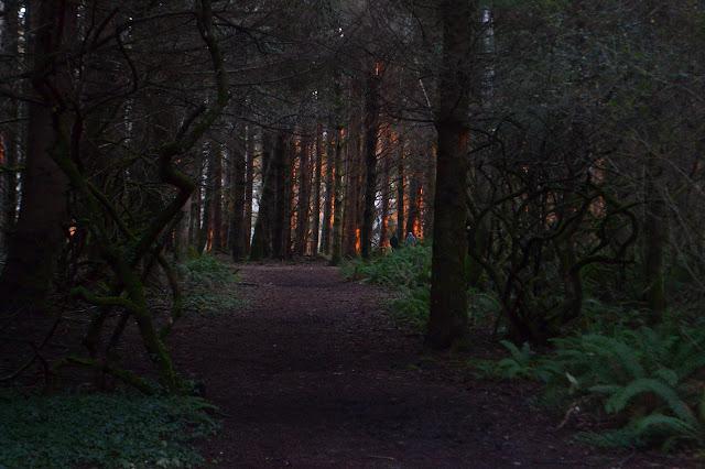 orange dots of light on trees ahead