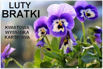https://misiowyzakatek.blogspot.com/2017/02/kwiatowa-wymianka-kartkowa-bratki.html