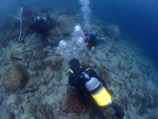 2021年4月17日の柏島ダイビング