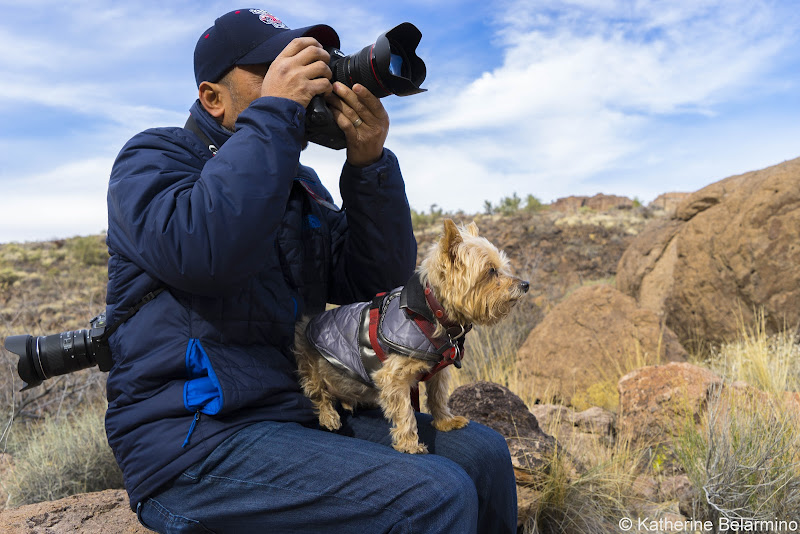 Henry and Romeo in Kingman Arizona Pet-Friendly Vacations Tips for Traveling with Dogs