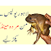 Lahore police action, many dead frogs recovered from 2 persons.