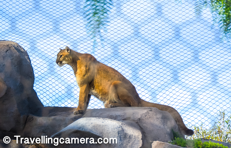 This guy was sitting on a high rock at a long distance and focussed on people boarding rope-way inside San Diego Zoo. Can someone tell me the name, as I forgot. Please drop a comment if you know the name.