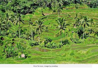 Rice terrace Bali Indonesia
