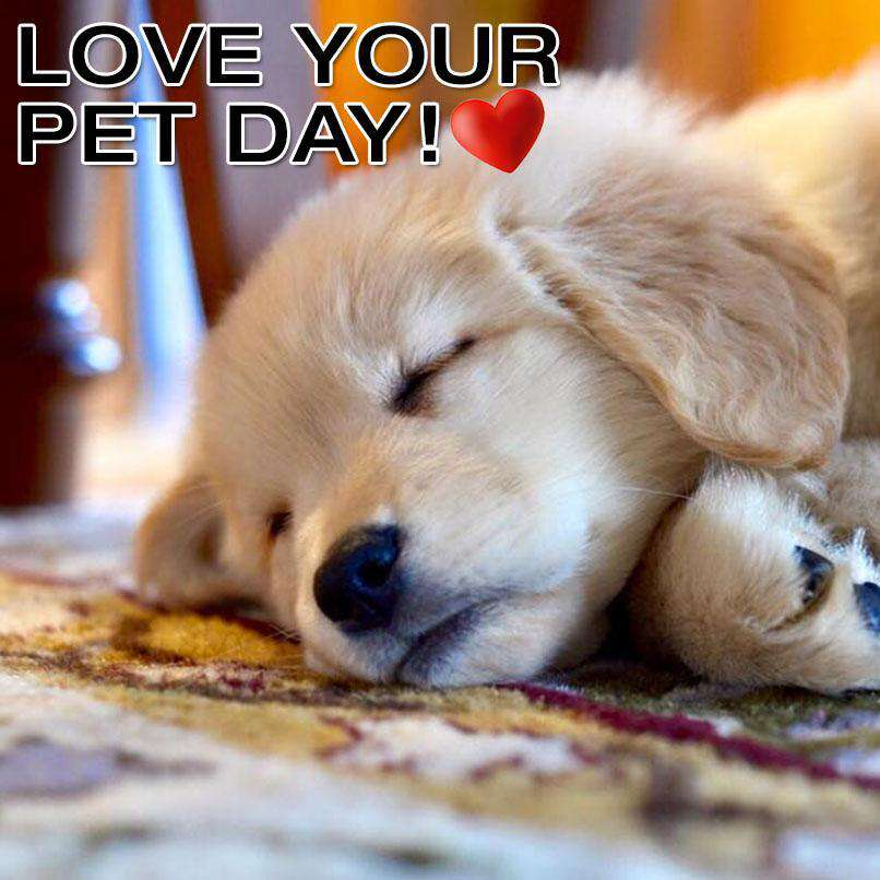 National Love Your Pet Day Wishes for Whatsapp