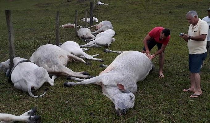 Raio atinge fazenda e mata 16 animais em Itabela, no sul da Bahia