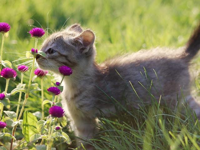 اجمل صور قطط كيوت