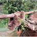 El Huila es una de las regiones más ricas en biodiversidad