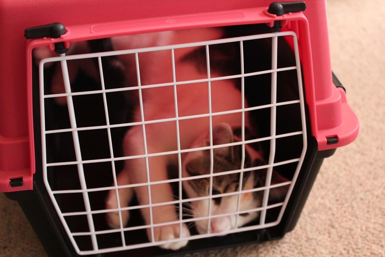 Pedro D Cat Cat In Cage