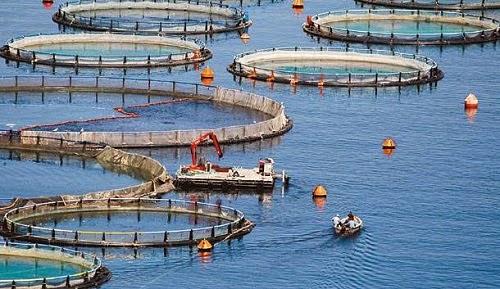 Θεσπρωτία: Ξένοι εταίροι θα βρεθούν στις ιχθυοκαλλιέργειες της λωρίδας Σαγιάδας, ως τις καλύτερες της Μεσογείου!