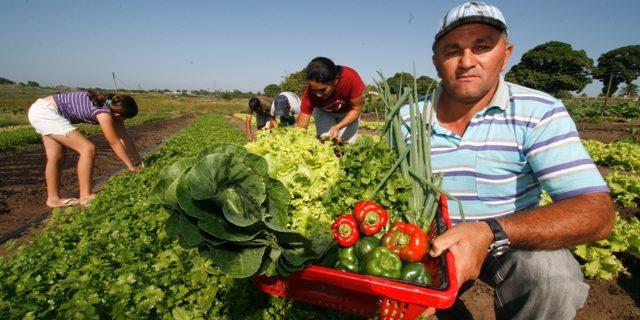 IFPE lança chamada pública para aquisição de gêneros alimentícios da agricultura familiar