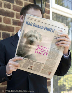 Fluffy the puppy in newspaper